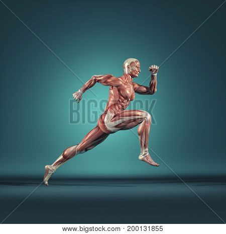 Male muscular system running. This is a 3d render illustration