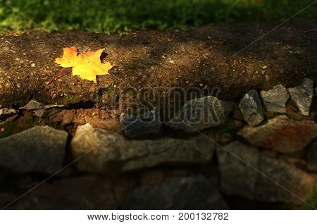 A bright autumn leaf in the light of the sun