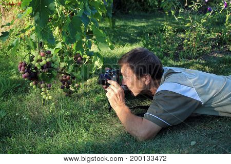 Man lies on grass and photographs bunch of grapes in garden by digital camera.