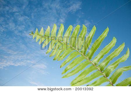 Fern leaves.