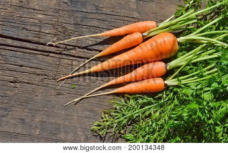 baby carrots and green leaves on wooden Board