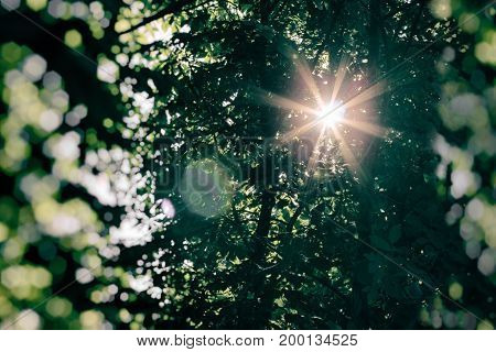 The sun's rays lit through tree tops - beautiful nature and sun flare
