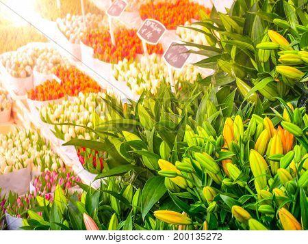 Dutch tulip market. Multicolored flowers for sale, Amsterdam, Netherlands