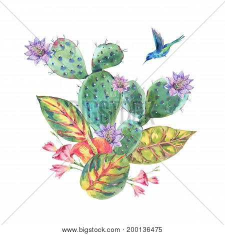 Exotic natural vintage summer watercolor greeting card. Cactus, succulent, tropical flowers, hummingbird. Botanical isolated nature cactus Illustration on white background