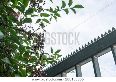 Barbed wire fence against the blue sky with clouds and tree leaf