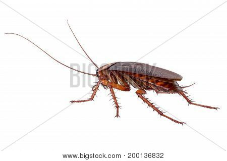 Cockroach bug insect small creeping creature. 3D rendering
