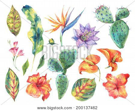 Watercolor set of vintage floral tropical natural elements. Exotic flowers, cactus, leaves botanical bright classic nature collection isolated on white background.