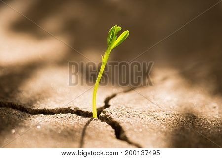 Concept of business growth: sprout growing out of concrete