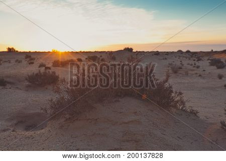Small sand barkhans with grass at the sunrise. Desert in arab emirates. View with bush in front