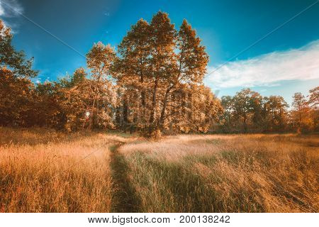 Autumn Landscape With Sunny Forest Oak Trees, Green Grass And Lane, Path, Pathway.