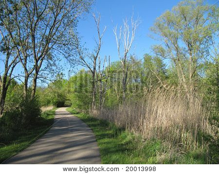 Spring Time trees and blue skies along the forest preserve bike path