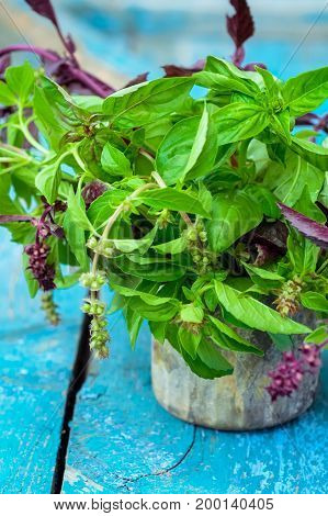 Fresh Organic Bunch Of Green And Purple Basil On The Blue Vintage Wooden Background. Selective Focus