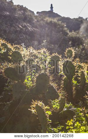 Opuntia stricta cactus backlight with El Rompido lighthouse at bottom Cartaya Huelva Spain