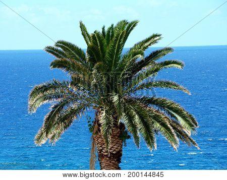 grüne Palmen Baumkrone vor dem blauen Meer des Atlantik und dem Himmel