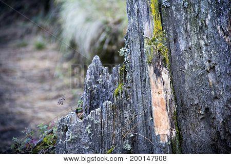 Corteza de árbol en la montaña la Malinche