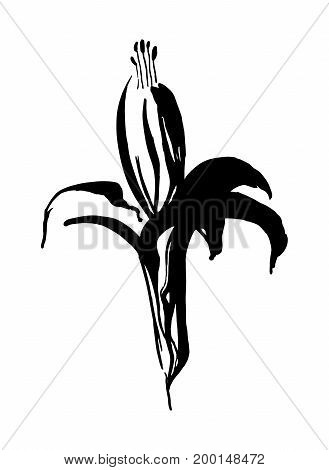 Hand drawn black stylized flower painted by ink. Sketch style. Vector illustration. Usable as print or mask.