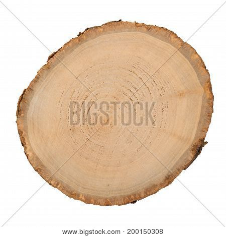 Wood log slice cutted tree trunk isolated on white top view.