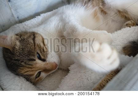 cute little cat sleep on the small bed