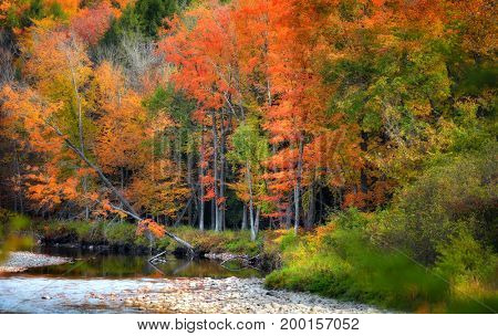 Autumn trees by stream in Vermont