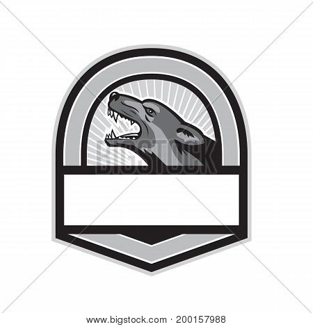 Illustration of an angry german shepherd dog head showing sharp pointed teeth viewed from the side set inside shield crest done in retro style.