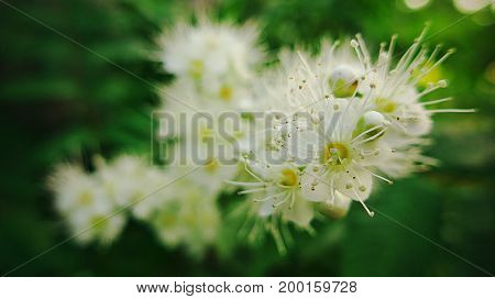 Beautiful white flowers with a yellow core. Macro photography.
