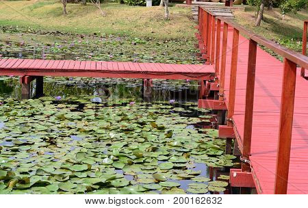 The Brown Wooden Bridge With Wooden Bar  And Many Of Lotus In The Pool