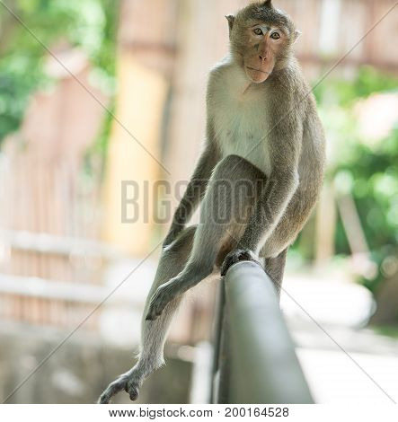 The brown monkey sitting on the iron rail is going to cry