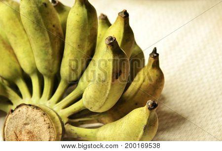 Thai Cultivated Banana for Thai ingredient dessert recipes such as glutinous rice steamed in banana leaf, banana in coconut milk , Thai banana