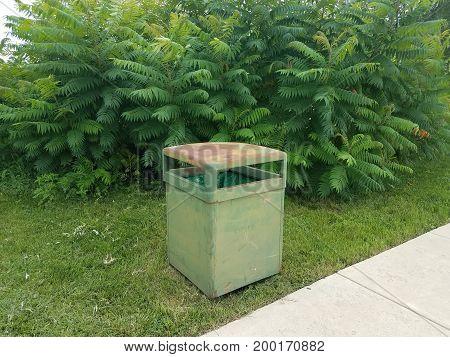 old green metal garbage can near tree and sidewalk