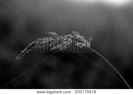 Photo of a beautiful branch with cobwebs and drops of water in a field lit by the sun