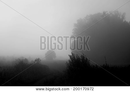 Photo of a rural landscape in a fog in the early morning