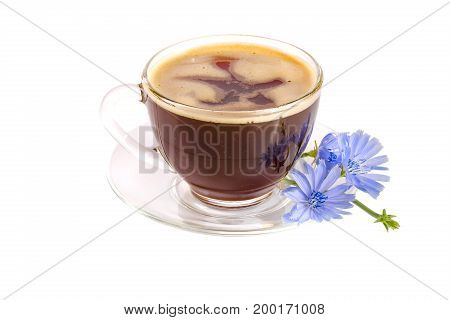 Chicory cup and chicory flower isolated on white background.