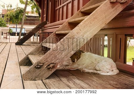 A pity dog lives under a wooden staircase.