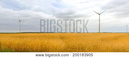 Harvesting of wheat ears. Gathered crops on field of agricultural farm. Wind turbine among golden ears of grain crops. Windmill turbine is environmentally friendly source of energy. Lithuania Baltic
