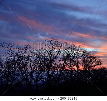 Silhouettes of trees with cloudy sky background at dawn, early spring