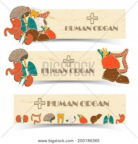 Colorful horizontal medical banners set with various human internal organs isolated on white background vector illustration