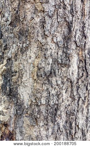 Close up tree bark texture background outdoor