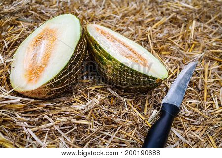 Cut into two parts a ripe green melon lies on the hay and next to it a stainless knife with a black handle close-up.