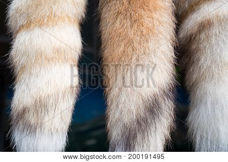 Close up fur souvinirs looking like fox tails hanging in shop