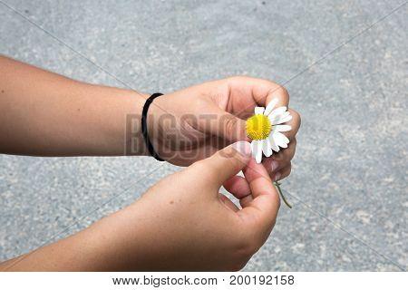 a woman s hand snatches flower petals