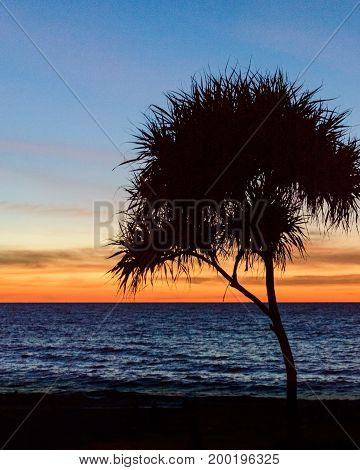 Palm Trees Silhouette. Sunset Colorful Sky Backlight In Asia