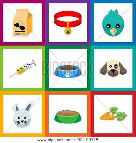 Flat Icon Pets Set Of Vaccine, Sparrow, Kitty Collar And Other Vector Objects
