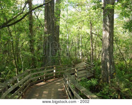 Florida Cypress Preserve 2389