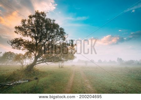 Lonely Tree Growing Near Country Road. Morning Sunrise Sky Over Misty Meadow Landscape. Autumn Nature Of Belarus Or European Part Of Russia.