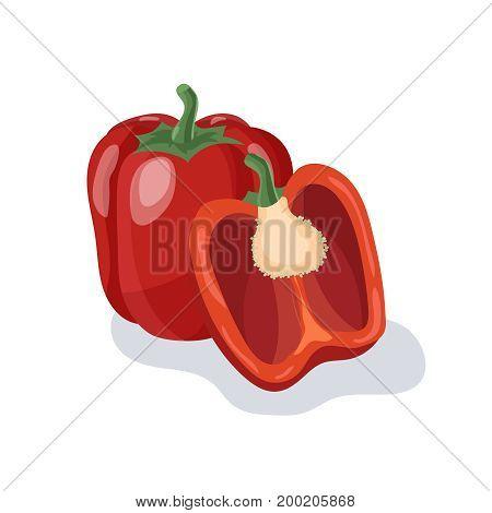 Red pepper vector illustration. Pepper cartoon illustration