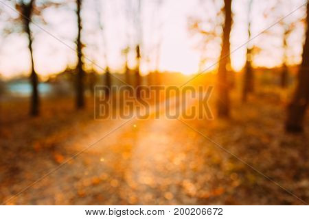 Abstract Autumn Natural Blurred Forest Road At Sunset Or Sunrise Background. Bokeh, Boke Woods With Sunlight, Red and Yellow Warm Colors of Nature.