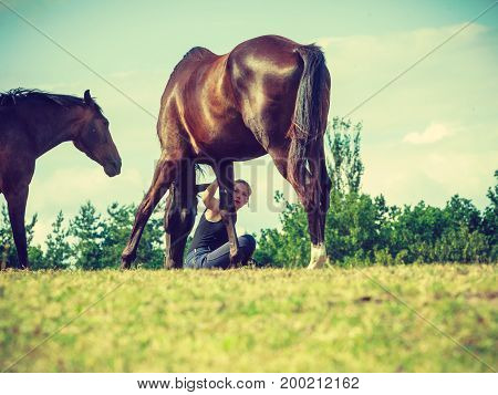 Animal and human love equine concept. Jockey woman sitting relaxing with horses on meadow