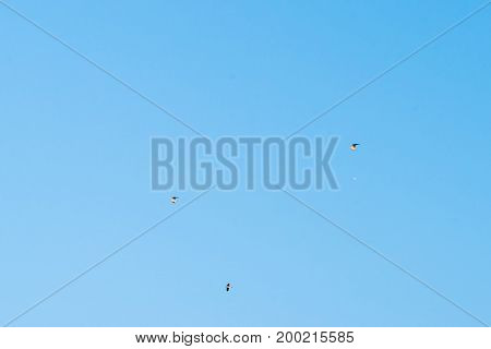 Picture of several seagulls flying in blue sky