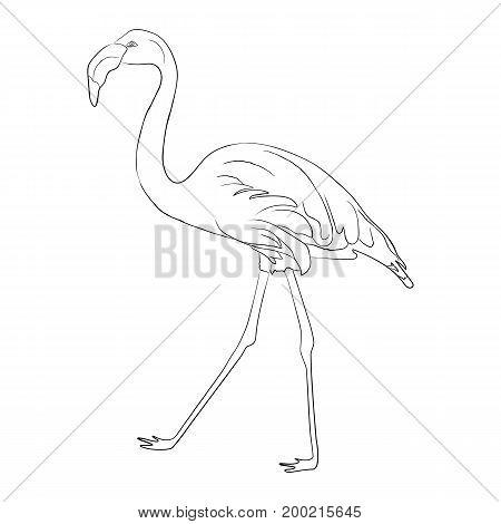 Hand drawn flamingo black outline sketch. Exotic bird illustration.