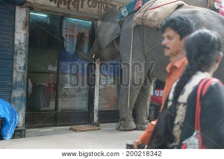 Dhaka, bangladesh, august 2017- An man riding on elephant collecting donation from local shoop on every friday at near bashundhora residential area in dhaka in bangladesh taken on 17 august , 2017